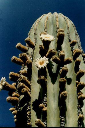 Baja 1974-2003 Photos