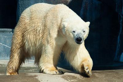 10-04-11 Toronto Zoo