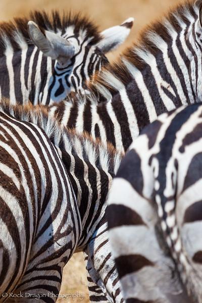 Ngorongoro-54.jpg