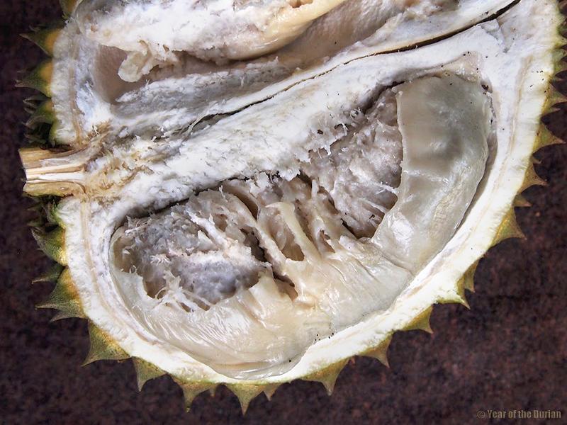Putus-durian-2-1.jpg