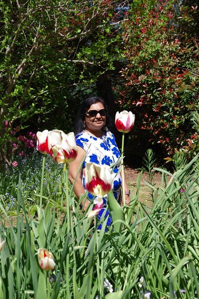 Ananda Tulips