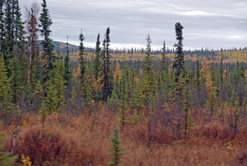 View from Train on way to Denali