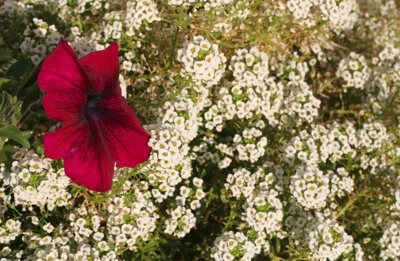 6973 LHStomp flower.jpg