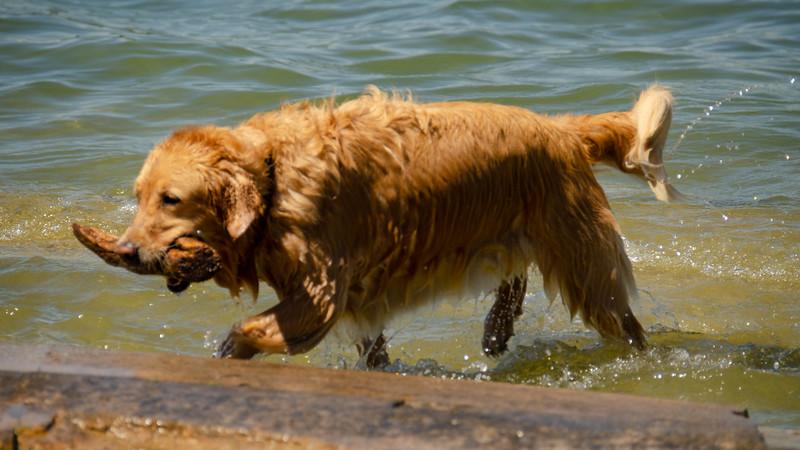 PuppyParty18-256.jpg