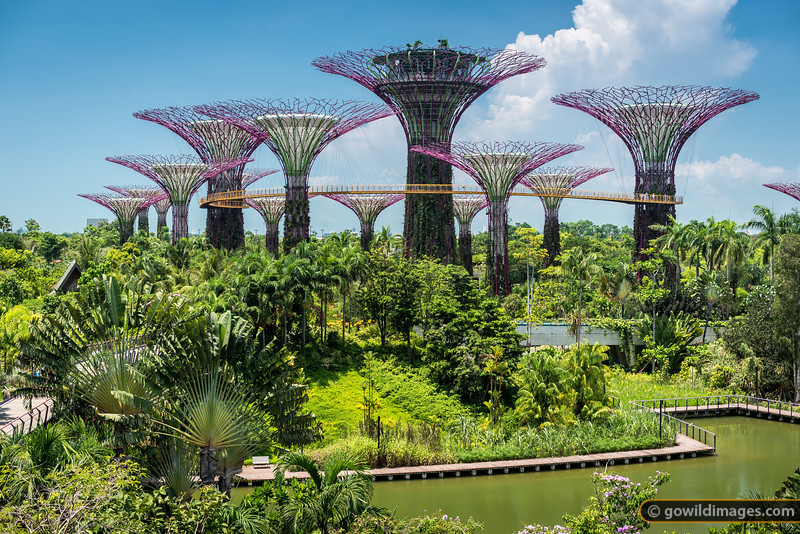 Supertrees, Gardens by the Bay