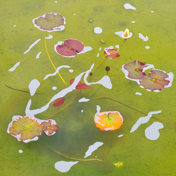 A Gaden Pond~3441-2sq.