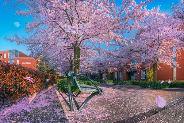 Fine Art cultuur foto van de laan met wilde kersenbloesems aan de Lambertushof te Nistelrode naast Laarstede in een kleurrijke lente.