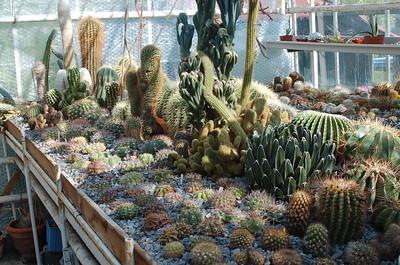 Cactuskas 2009