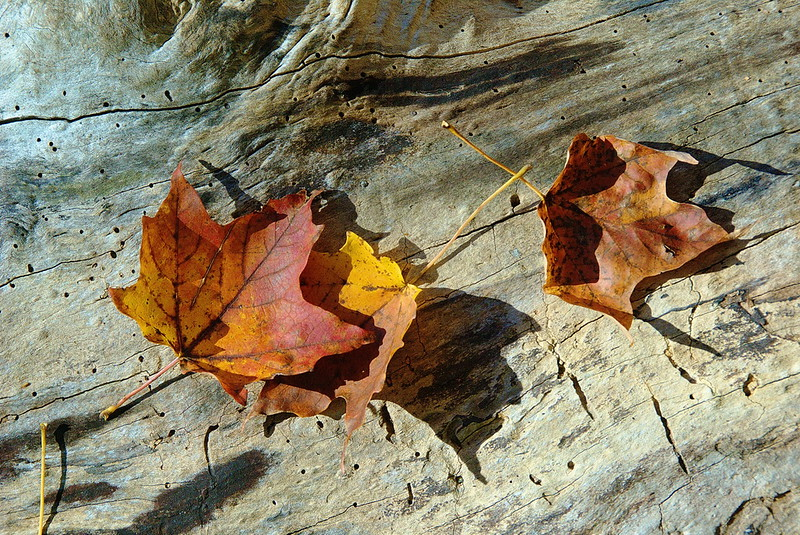 2010-10-09 10-18-38 - IMGP6461.jpg