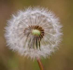 Pretty Weeds :-)