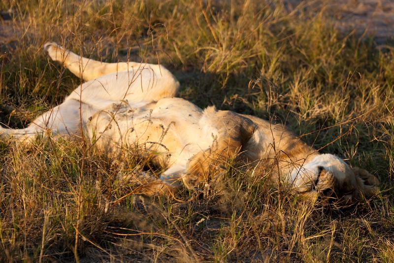 Botswana-35.jpg