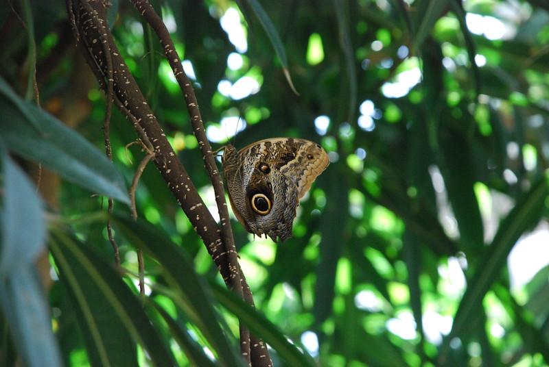 Denver Butterfly Pavilion 2432848300.jpg