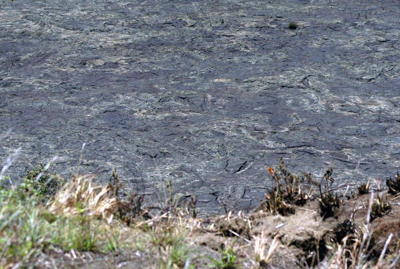 213- 20080412- Hawaii 15- Volcano Nat'l Park DSC_2912.jpg