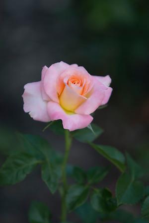 DM Art Center & Rose Garden