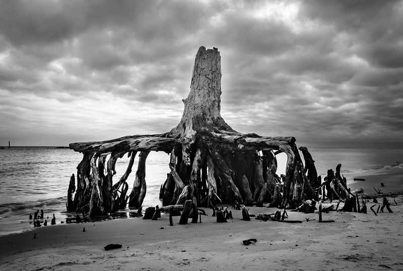 Tree stump Dauphin Island BW 122713 (1 of 1).jpg