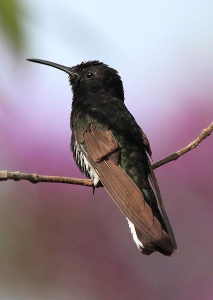 Brazil Birds and Scenery 2003 2006 2010 2013