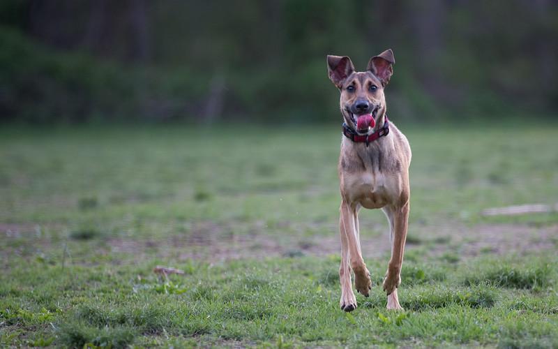 Medford Dog Park 5.2.2014-3761.jpg