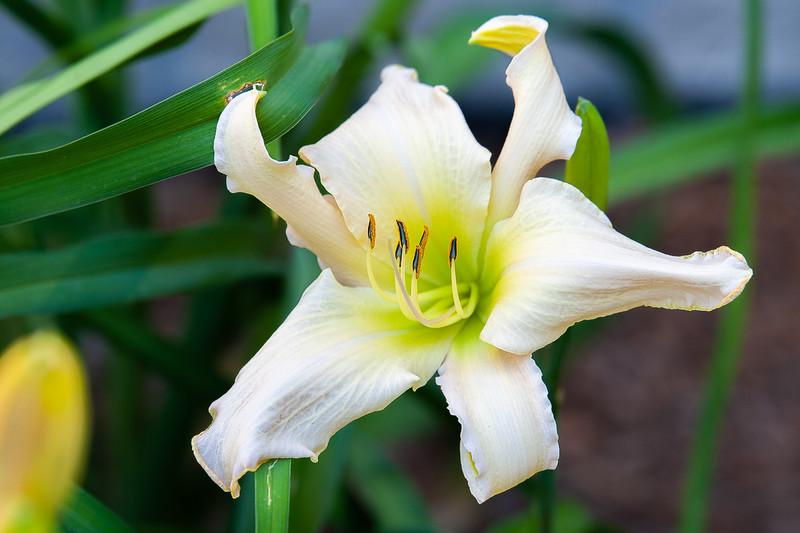 20190714 Daylilies and Flowers-6412.jpg