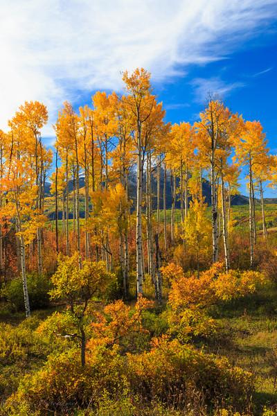 Colorado Color-23.jpg