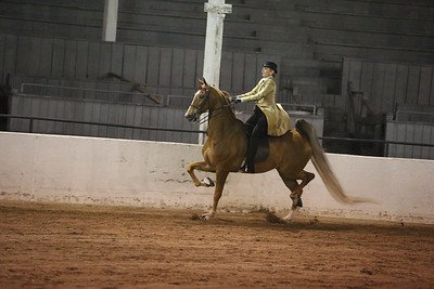 24. Five Gaited Amateur