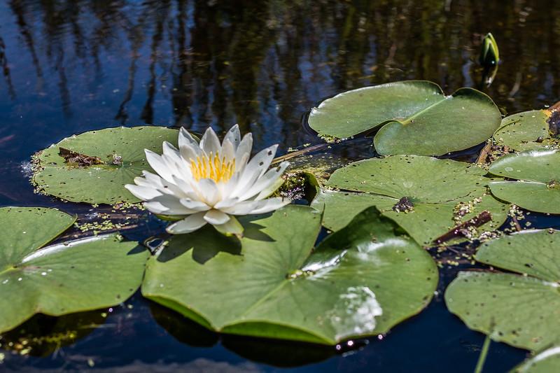 Lowes Lake-9098.jpg