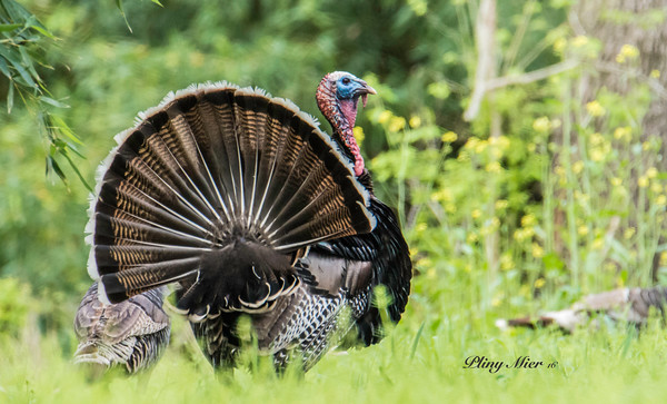 Turkey_DWL0445.jpg