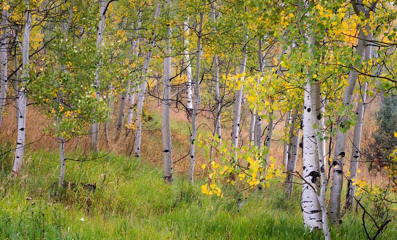 Vista Verde-5859.jpg