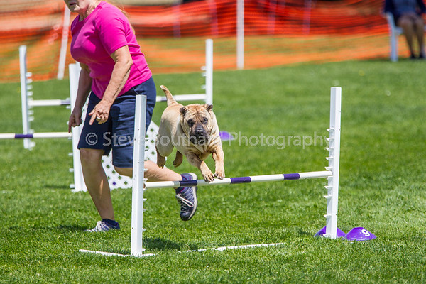 Del Monte KC Agility Trial May 30, 2015