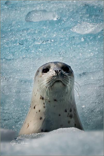 SR3_2070 Seal pup LPN W.jpg