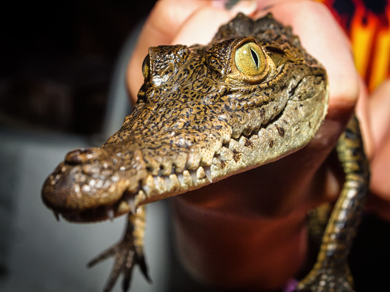 American Crocodile Education Sanctuary--20.jpg