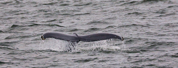 Jersey shore whale watch Oct 20-84.jpg