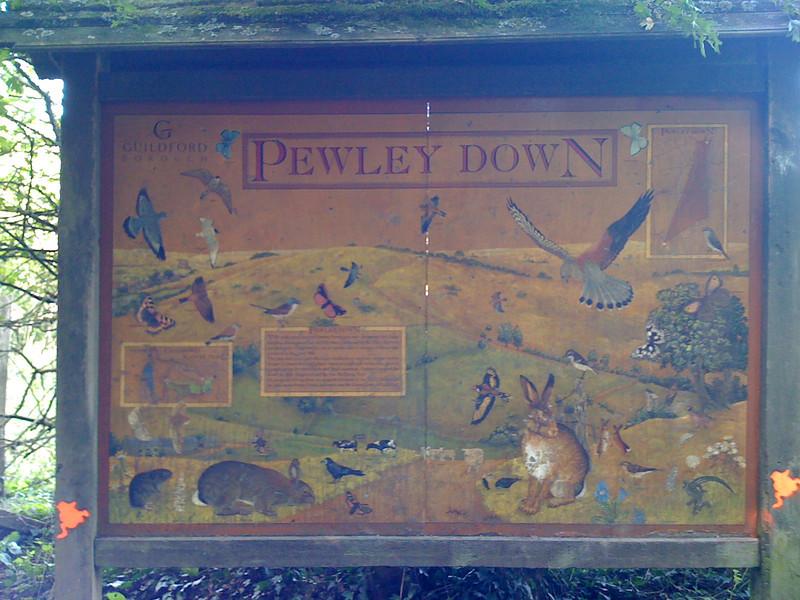 Pewley Downs