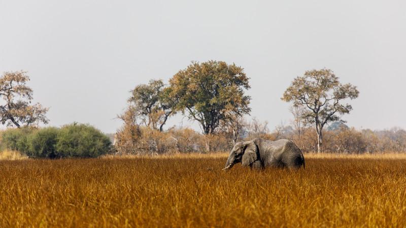 Botswana_0818_PSokol-1411.jpg