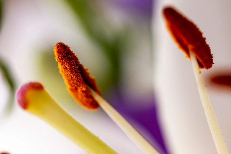 Flower Macros