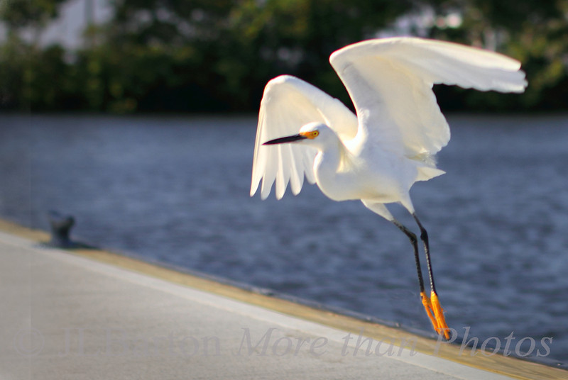 We have Lift-off