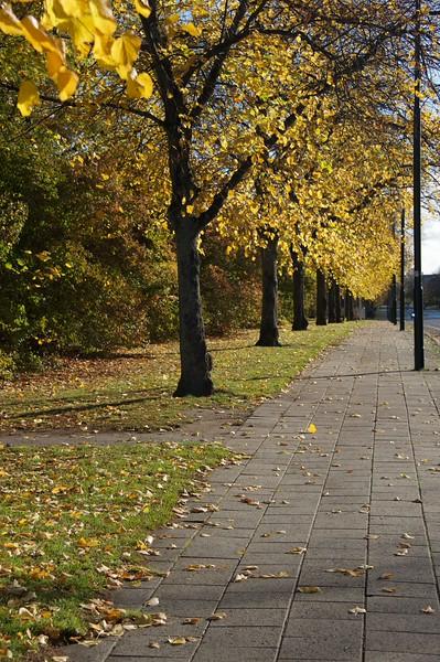 20151025 Sverige, Malmö Autumn