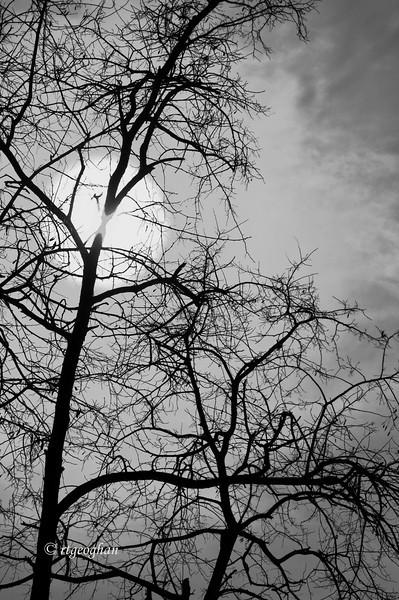 BranchesSun_Feb9_0677.jpg