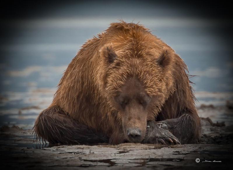Alaska 6.jpg