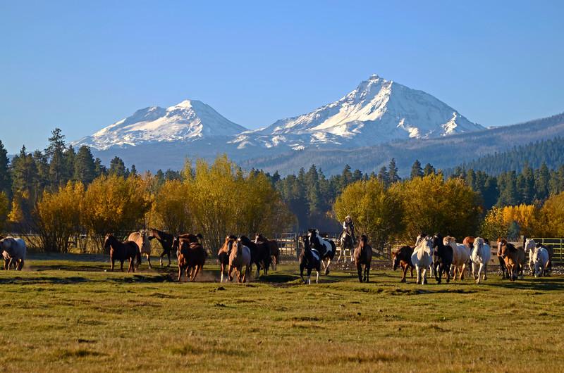 BBR-Cowgirl-bringing-in-the-herd_KateThomasKeown_DSC9910rt.jpg