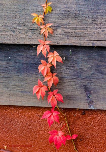 Fall15-4.jpg
