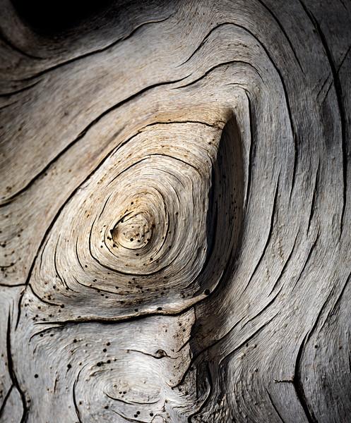 Moreton Island Tree Trunk