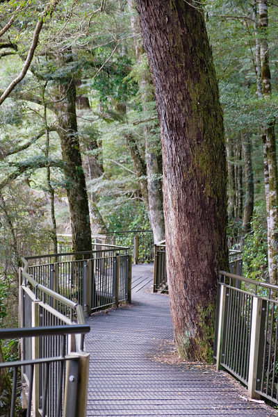 Wooden walkway in Fjordland National Park, South Island, National Park
