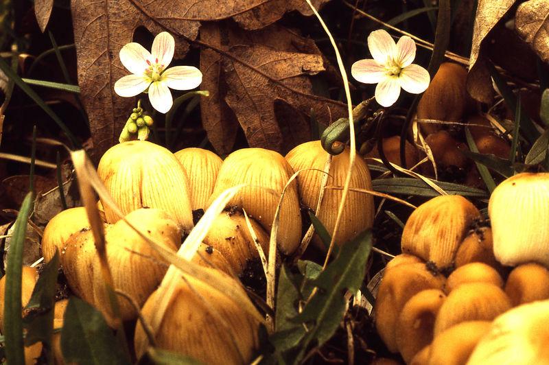 mushrooms flowers.jpg