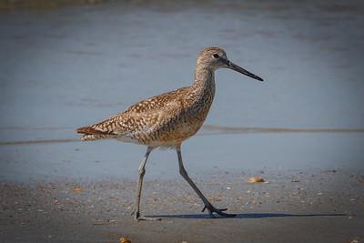 07_Oak Island - Wildlife