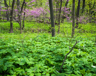 Lyman Woods Forest Preserve