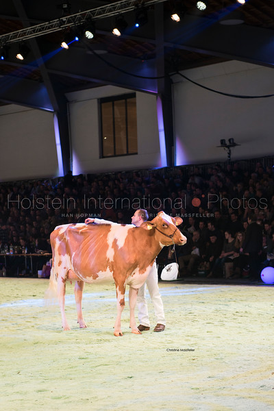 misc-red-holstein_120118-0202.jpg