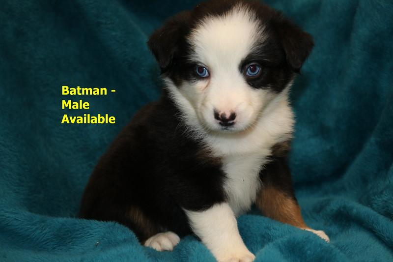Batman has been reserved