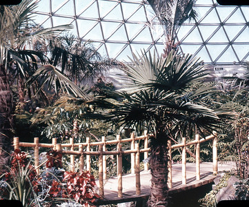 Bloedel Conservatory, Tropical Growth
