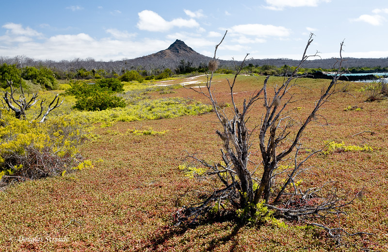 Landscape at Dragon Hill, Santa Cruz Island