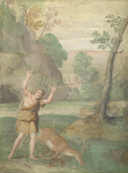 The Transformation of Cyparissus